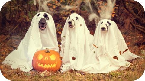 Vier Halloween veilig.