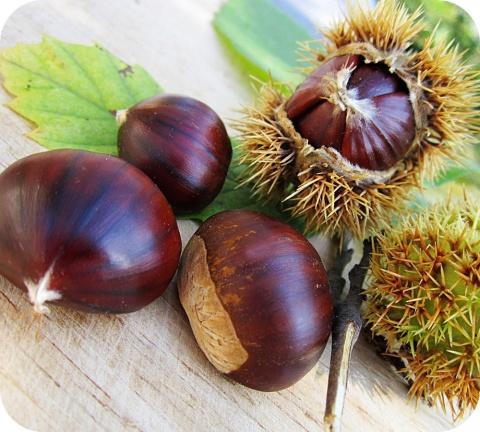 De herfst is het seizoen van de kastanjes, noten en eikels.