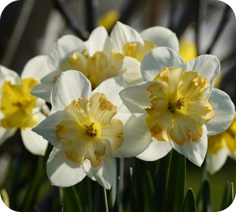 Het is nog even wachten op de lente, maar de natuur begint al te ontluiken.