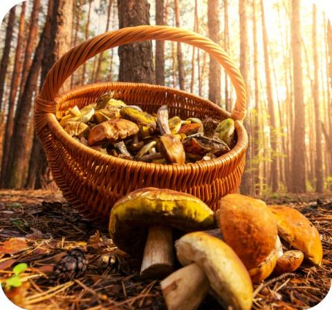 Let op voor giftige paddenstoelen