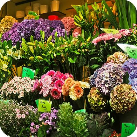 Naar het tuincentrum? Informeer je grondig, want soms zijn mooie planten ook giftige planten!