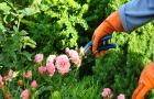 Tuinieren zondert zorgen.
