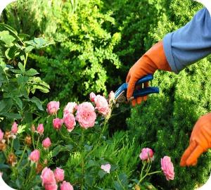 De geneugten van het tuinieren worden opnieuw ontdekt.