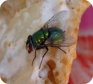 Binnenhuisgebruik van insecticiden niet altijd zonder risico's