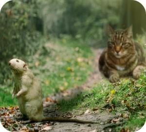 In ons land zijn er op dit moment twee veel gebruikte groepen ratten-en muizenvergif.