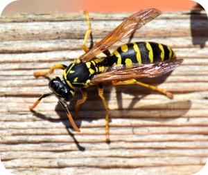 Wat moet ik doen na een bijen- of wespensteek?