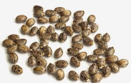 De zaden van de boom wordt wonderbonen genoemd. Uit wonderbonen wordt wonderolie (of castorolie) geperst. De overblijvende pulp wordt als veevoeder gebruikt, maar bevat het zeer sterke gif ricine dat eerst door een langdurige hittebehandeling onschadelijk moet worden gemaakt.