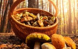 Om de paddenstoelen te verzamelen gebruikt u een recipiënt die luchtdoorlatend is, zoals bijvoorbeeld een rieten mand.