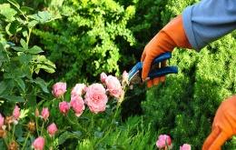 Sommige planten kunnen verwondingen veroorzaken