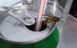 Let op met drank in een blikje! Giet het bij voorkeur over in een glas.