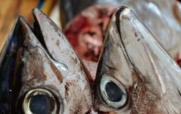 Eenmaal aanwezig overleeft het histamine het koken, invriezen en roken van de vis.