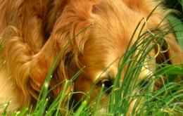Honden zijn weinig kieskeurig als het op eten aankomt. Neem dus geen risico en houd chocolade uit de buurt van honden.