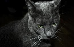 Katten zijn kieskeuriger
